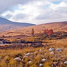 Rannoch Moor,Glencoe Scotland by Margaret S Sweeny