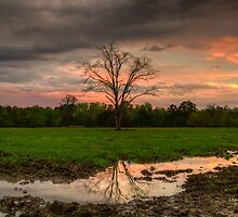 Mud Puddles by Leasha Hooker