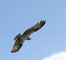 Wings stretched wide by Greta van der Rol