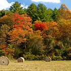 Autumn Harvest by Joe Saladino