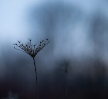 I stand alone by scullyb