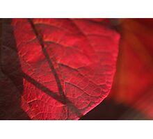 autum reds Photographic Print
