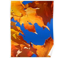Leaves of fall....Cornucopia Poster