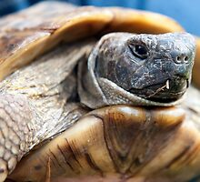 Portrait of a Tortoise by Togfather