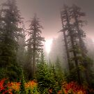 Some Colors, Some Fog, Some Love by Charles &amp; Patricia   Harkins ~ Picture Oregon