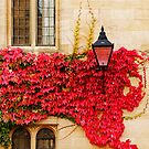 Autumn in Oxford by Irina Chuckowree