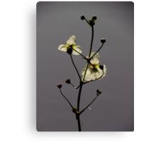 Botanical Beauties ~ Part One Canvas Print