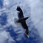 Seagull Overhead by ChrisCopley
