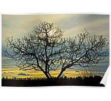 Loney tree at sunset Poster