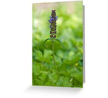 Green beauty Greeting Card