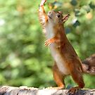 High four! by Anthony Brewer