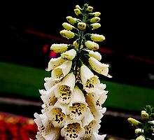 White Bells by Michael Taggart
