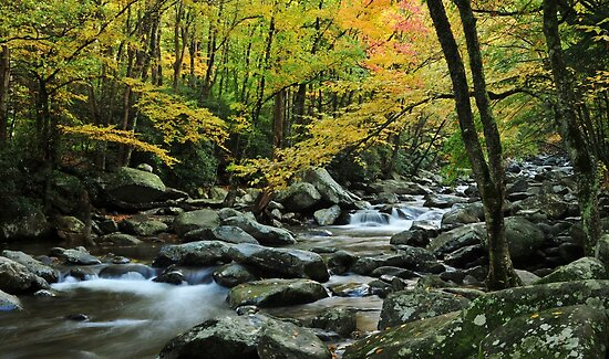 smoky mountain stream by dc witmer