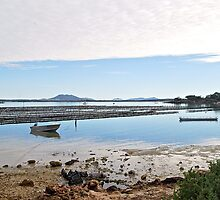 Oysterbeds by Ian Berry