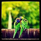 Rainbow Lorikeet Love by Sinclair Moore