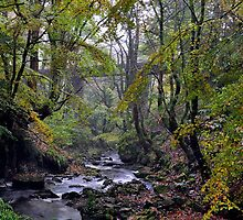 Autumn, Garell Glen, Kilsyth,Scotland by Jim Wilson