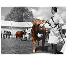 Northumberland Show 2012 Poster