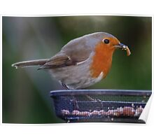 Robin and a mealworm Poster