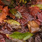 Murky Autumn Leaves  by ElsT