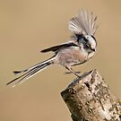 Long- tailed tit by M.S. Photography & Art