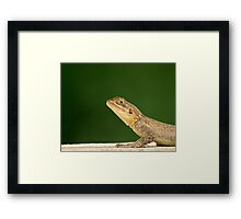 Lizard head and front legs Framed Print