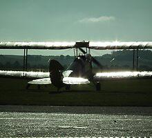 On Shimmering Wings by Andy Jordan