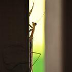 Praying Mantis by CADavis