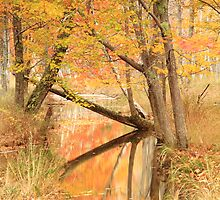 Autumn Stream by Roupen  Baker