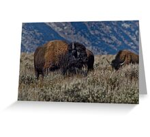 Bison Bull in the Sagebrush Greeting Card