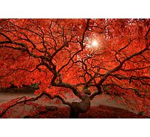 Red Lace Photographic Print