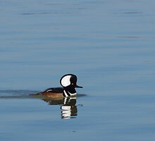Hooded Merganser by Billy Griffis