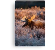 Moose Glow Canvas Print