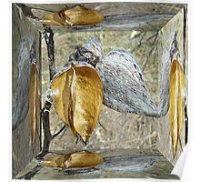Milkweed Pods - Mirror Box Poster