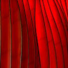 Red Folds by dgscotland