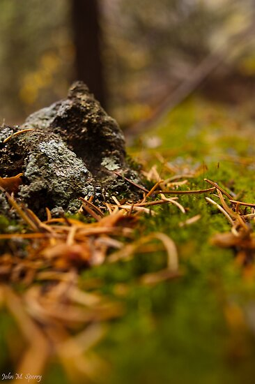 A close look at the forest floor by John  Sperry
