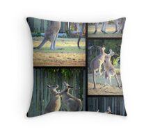 Boxing Kangaroos at Woodgate Beach Throw Pillow