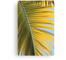 MCC Palm Canvas Print