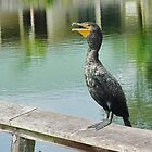 Great Cormorant by Penny Rinker