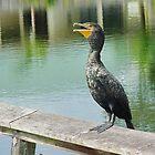 Great Cormorant by Penny Rinker