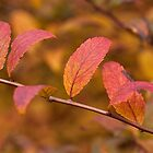 Autumn Shrub by Eunice Gibb