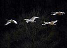 The family flight by Jean Poulton