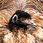 Big Feather Duster by Trudi's Images