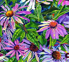 Echinacea by Morgan Ralston
