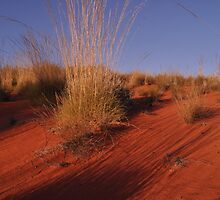 Red Center Desert Dune by Thomas Sherrell
