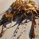 Moeraki seaweed by Kyra  Webb