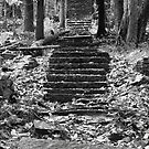 Old Stone Steps by Roupen  Baker