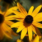 black-eyed susan by Linda Makiej