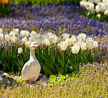A Stoned Duck by Kuzeytac