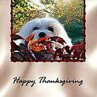 Snowdrop the Maltese Thanksgiving Card by Morag Bates