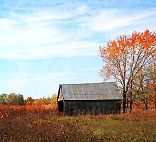 Shed on Munkers Creek Road by Sharlotte Hughes